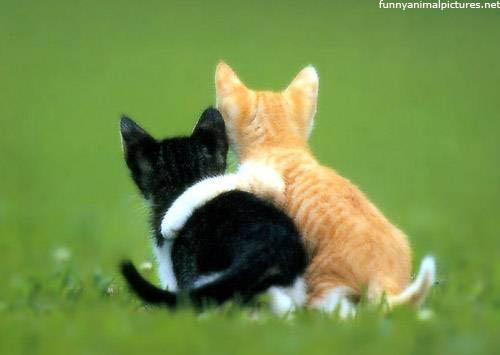 Cute Best Friends
